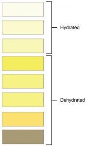 Urine colour chart 1